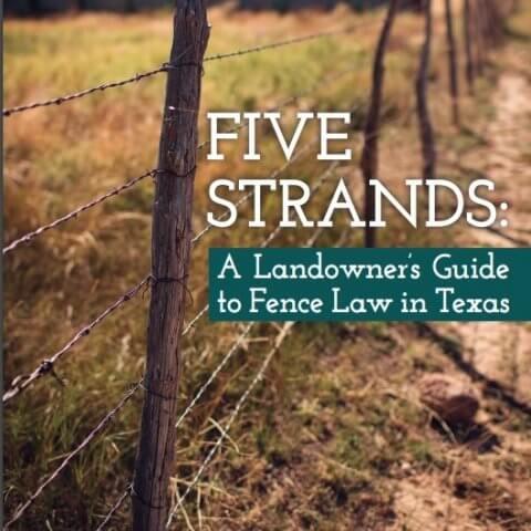 Five Strands Book Cover