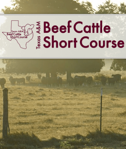 TAMU Beef Cattle Short Course