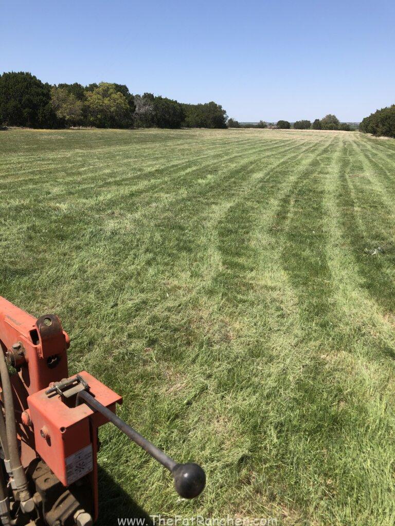 Pasture after shredding